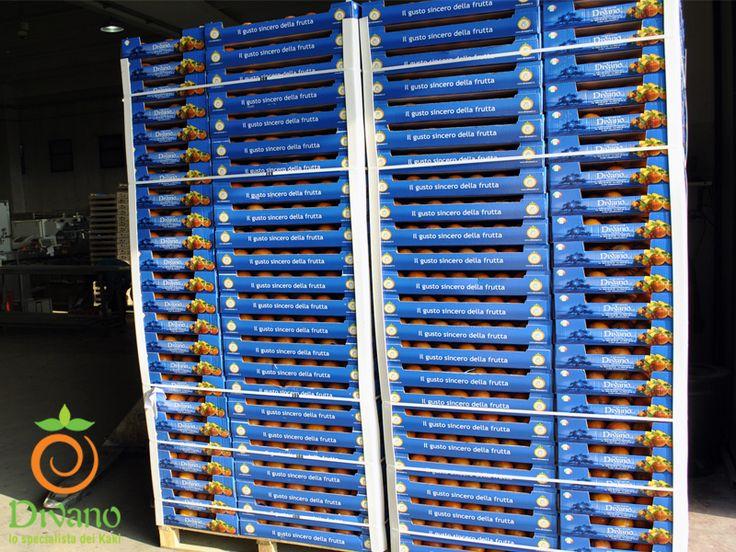 Persimmos pallet ready for delivering to GDO. Info: www.divanosrl.it/en. Pallet di Kaki confezionati e pronti per la consegna alla GDO. Info: www.divanosrl.it