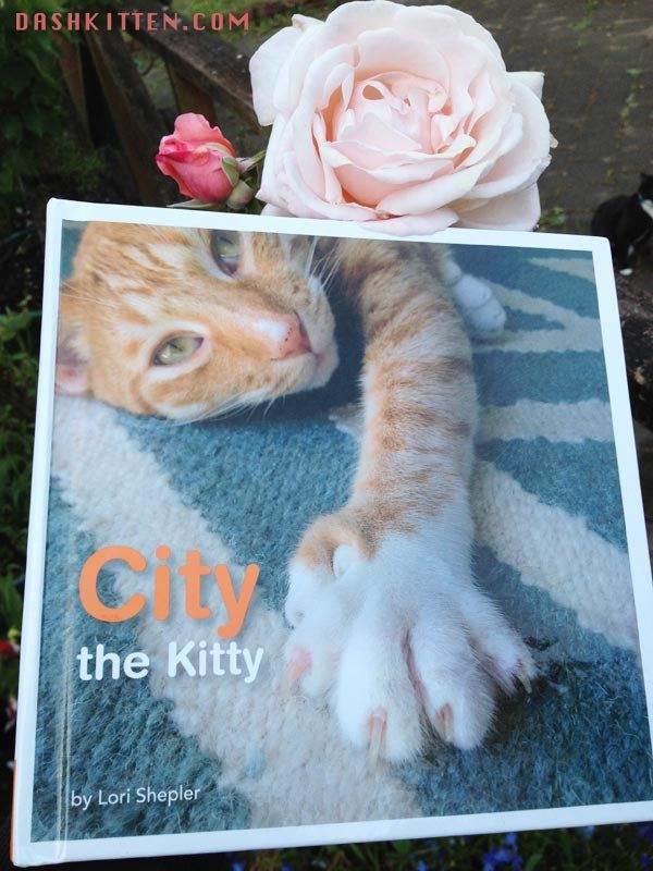 City the Kitty Anti Declawing Champion