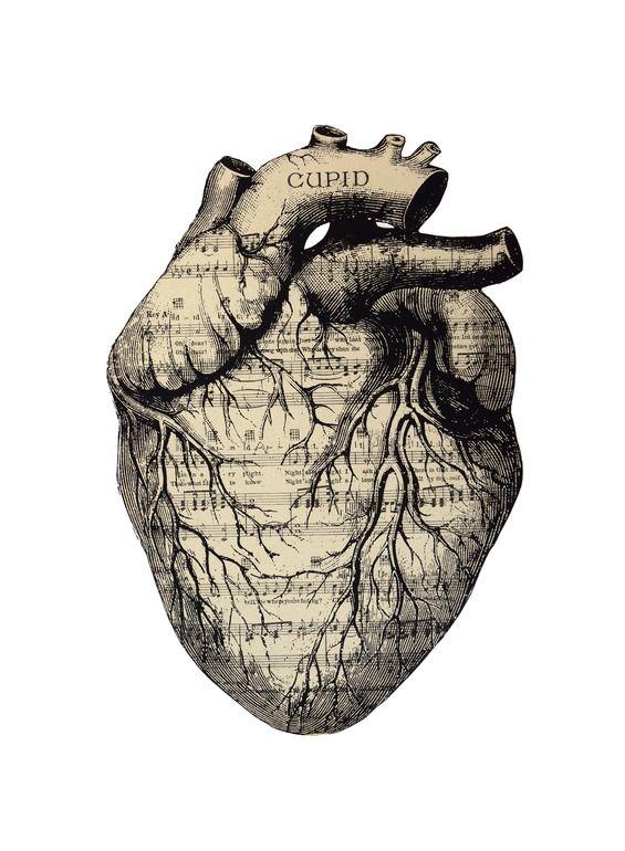 art + anatomy