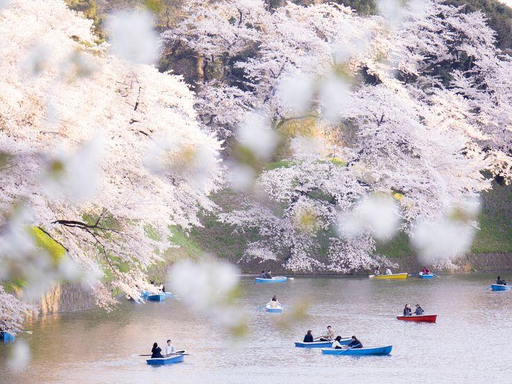 Spring has come! by Hiro Nakajima on 500px