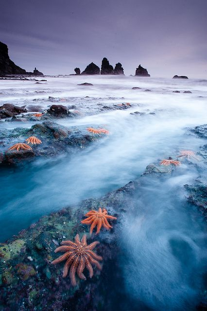 starfish colony on the west coast of New Zealand