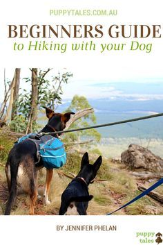 Beginners Guide to Hiking with your Dog