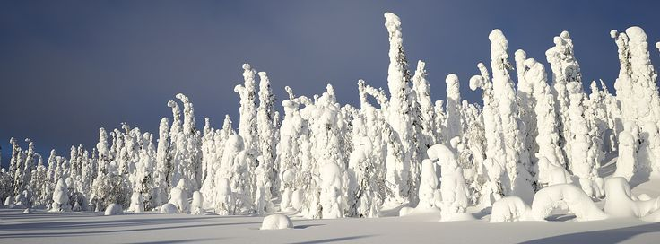 White forest by ollivei on 500px