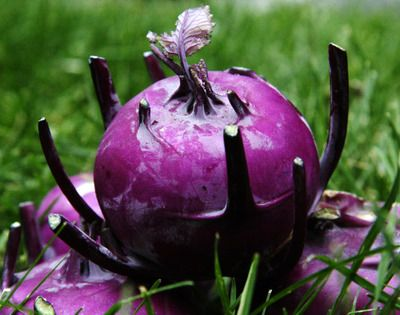 Purple Vegetables | ... Kohlrabi Seeds Online | Bulk Kohlrabi Vegetable Seeds at Eden Brothers