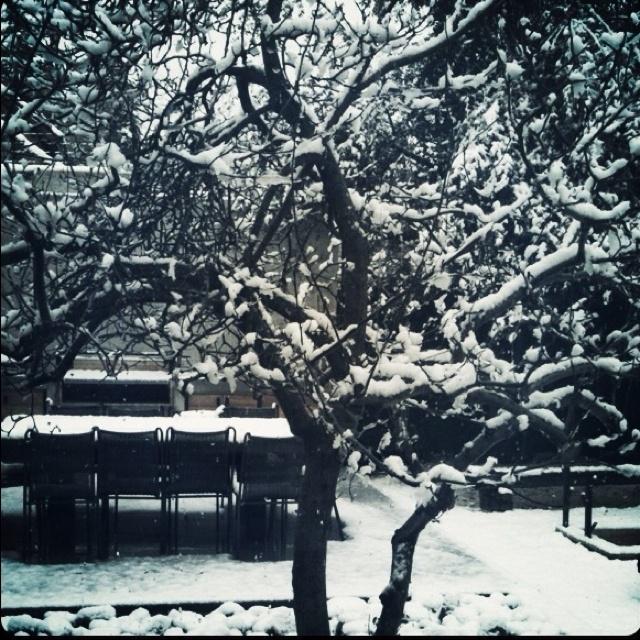 Magnolio Winter