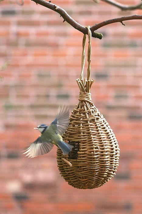 'Teardrop' willow bird feeder project - As featured in book: Willow Craft 10 Bird Feeder Projects