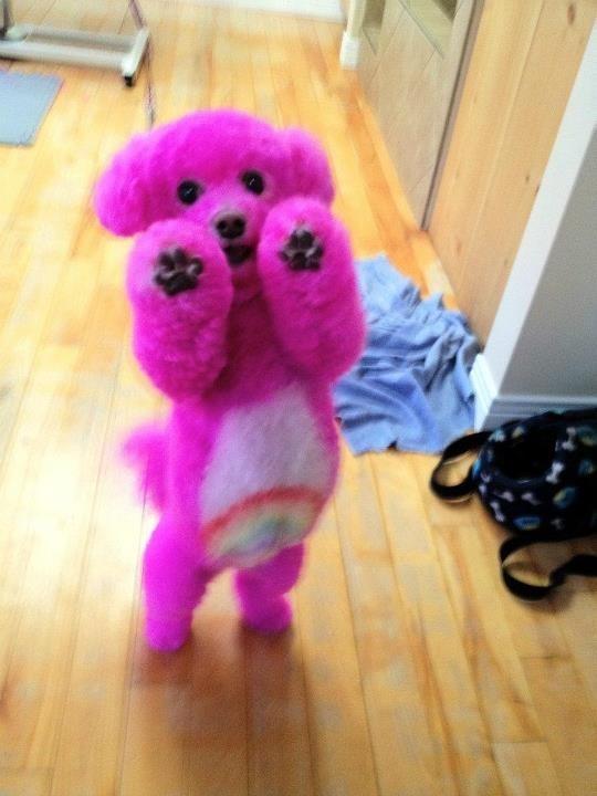 Lion Dog Grooming
