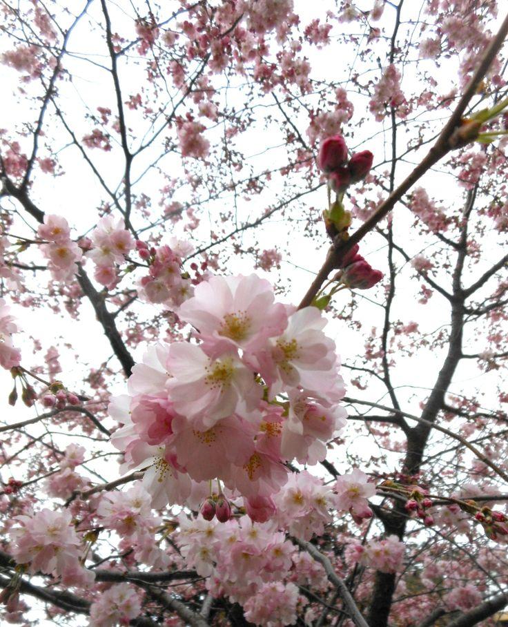 Arriva la primavera... <3