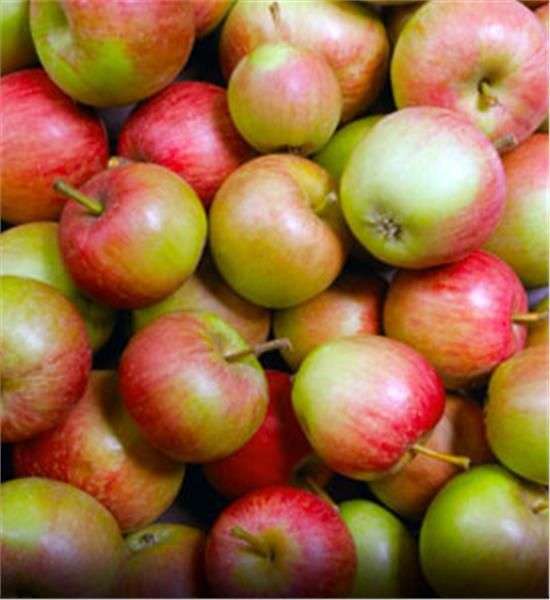 Stayman Winesap Apple- buy trees from arborday.org