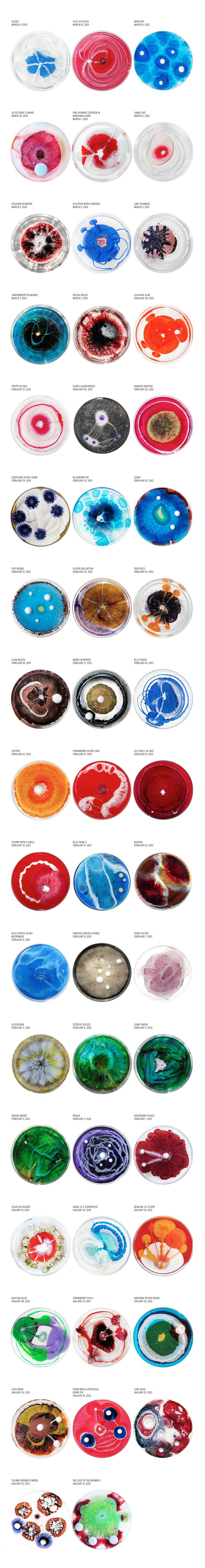 The Daily Dish 2013 — Amazing petri dish painting by Klari Reis