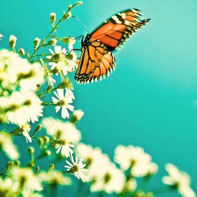 La energía de amor, metamorfosis y libertad (ésta foto también la sacaste vos?)