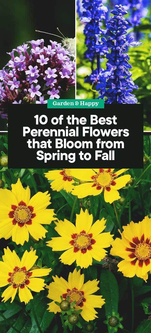 10 of the Best Perennial Flowers that Bloom from Spring to Fall – Garden and Hap…