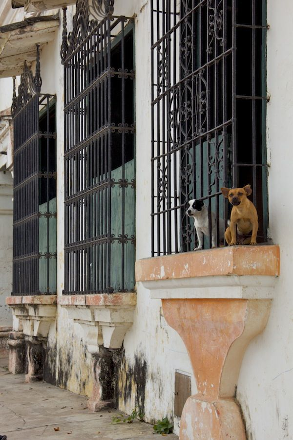 Only these barking dogs disturbed the peace in Mompox, Colombia