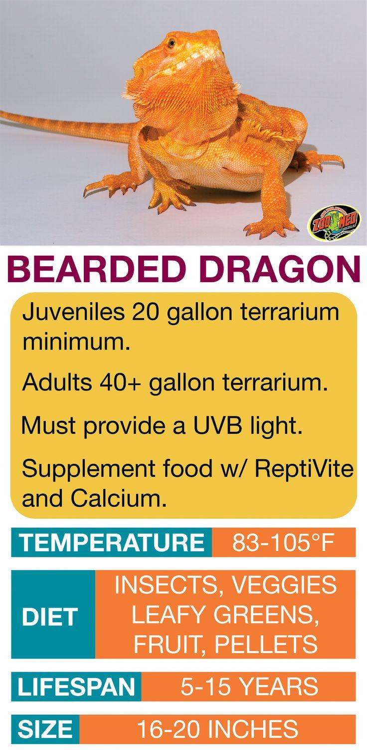 Bearded Dragon Care Sheet. Learn the basics of Bearded