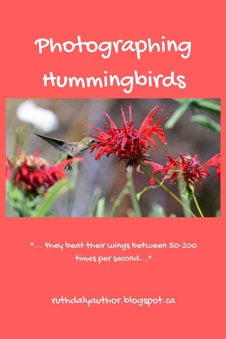 Photographing Hummingbirds