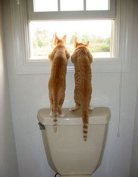 Ever watchful.: Cats, Orange Cat, Friends, The View, Toilets, Funny Animal, Funny Kids, Kitty, Bathroom Window