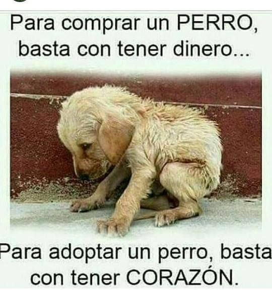 Para comprar un perro, basta con tener dinero ... Para adoptar un perro, basta con tener corazón #foto #fotos #frase #frases #perros #perro #amantesdelosanimales #mascota #mascotas #animales #animal