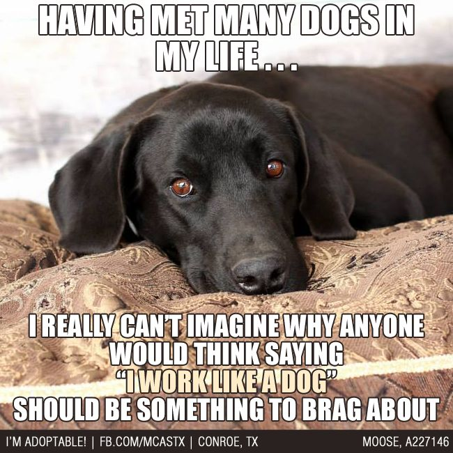 Seriously! How about I'd *LIKE* to work like a dog??? #funny #dogs
