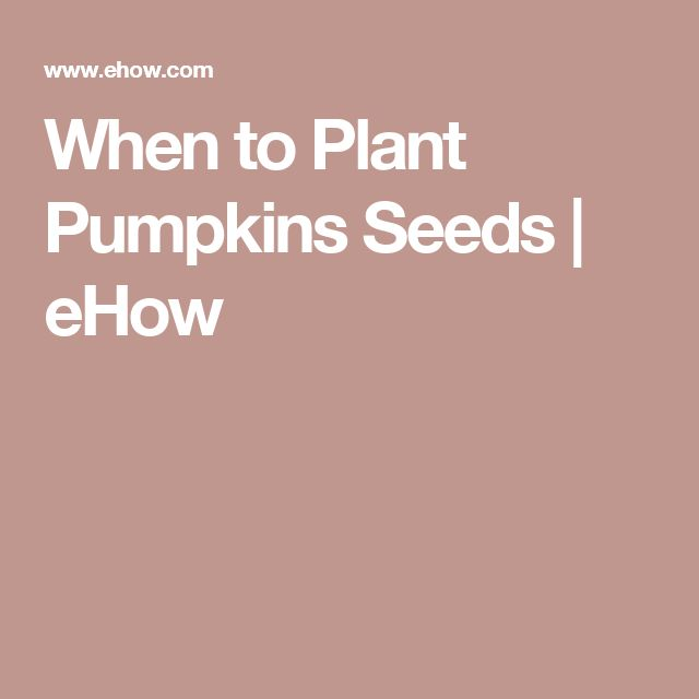 When to Plant Pumpkins Seeds | eHow