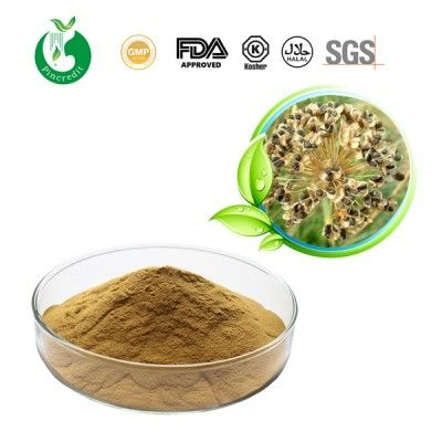 Garlic Chives Seed Extract