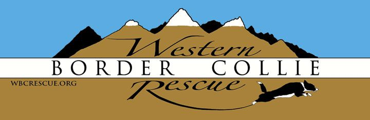Western Border Collie Rescue is an all-volunteer organization working in and around the beautiful state of Wyoming. Their mission is to rescue, rehabilitate and rehome Border Collies that have been abandoned, neglected or are no longer able to remain in their current home (as space permits). WBCR works hard to place adoptable dogs into appropriate forever homes, making the best match possible between the dog and the adopter(s), and also works to educate the public on the characteristics and…