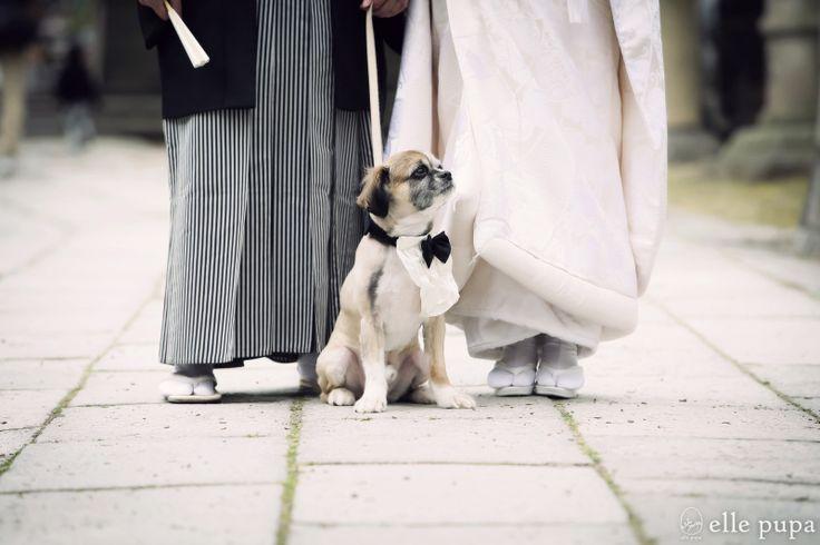 ゴンちゃん前撮り初体験の巻*  *ウェディングフォト elle pupa blog* Ameba (アメーバ)