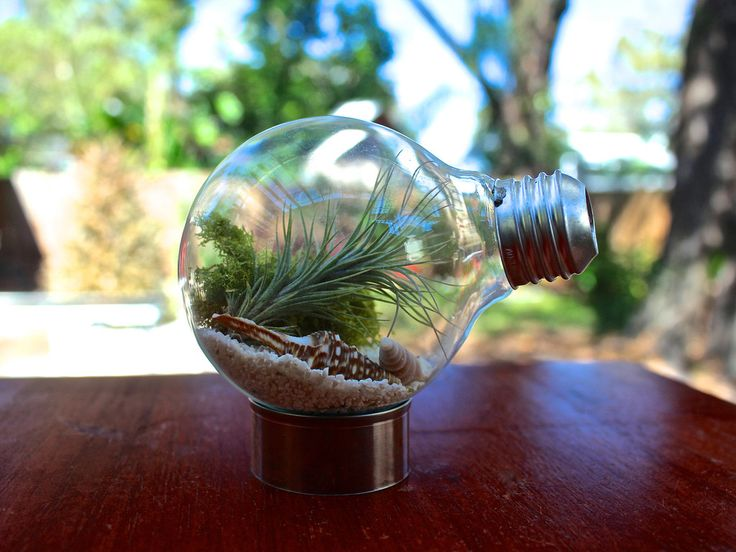 the light bulb air plant terrarium made from recycled light bulbs 1999 from air - Kopfteil Plant Knig
