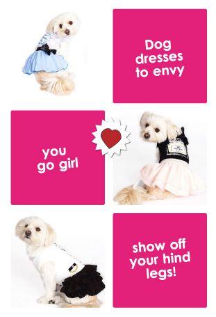 Dog dresses to ENVY!