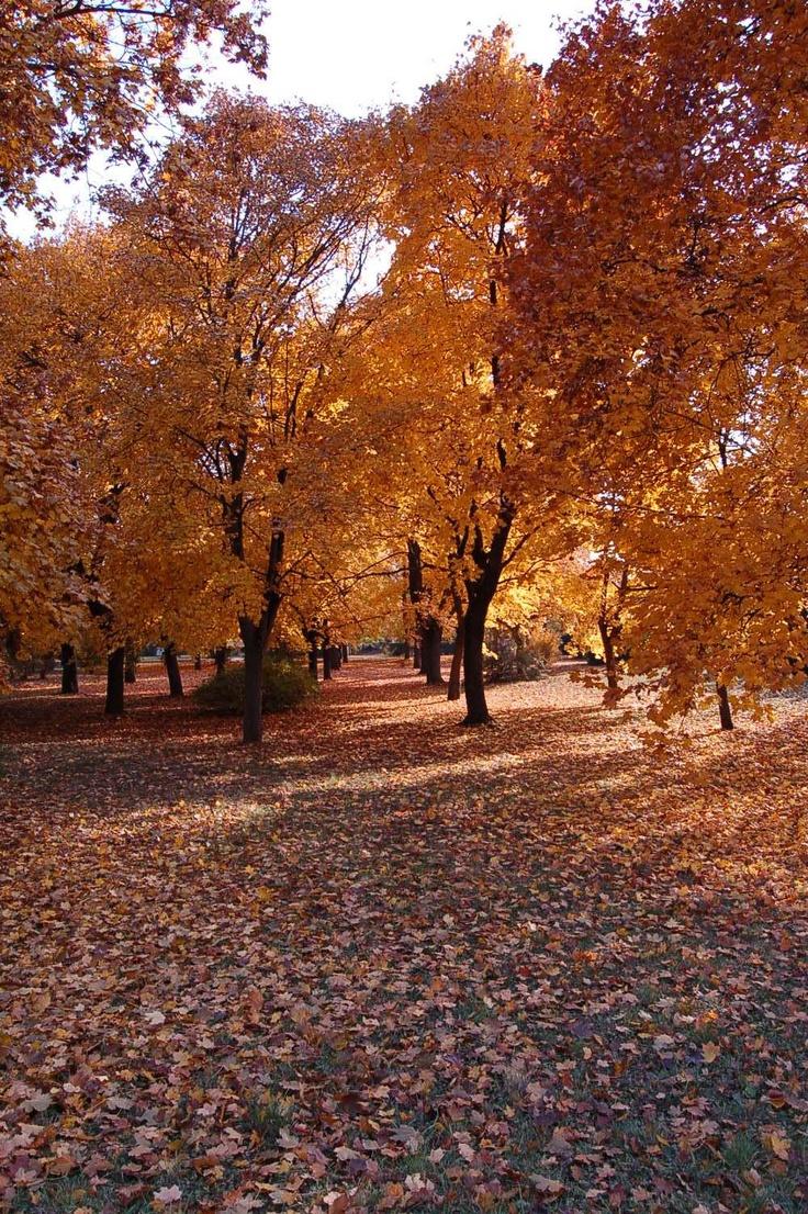 Őszi fotó olvasónktól, Krisztinától. / Autumn photo by our reader Krisztina.