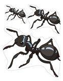 Ants Theme Activities for Preschool PreK and Kindergarten