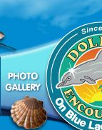 Dolphin Encounters Website