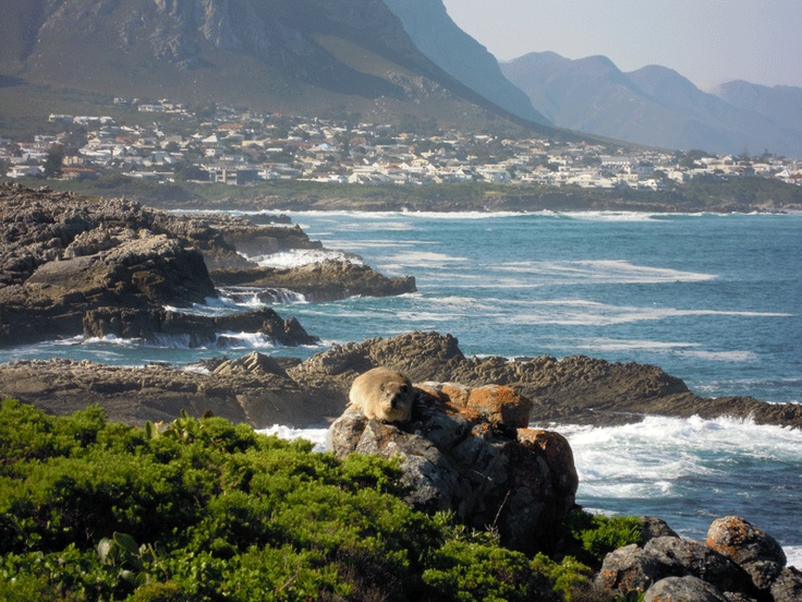 Hermanus - a small seaside holiday resort renowned for its incredible whale-watching opportunities ! A few hours drive from Cape Town.