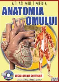 "SceneFZ :: Details for torrent ""Anatomia.Omului-Atlas.multimedia.Ed.Syntagma-TEKKEN"""