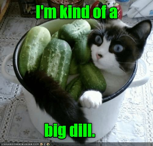 If you find yourself in a pickle... | Cats scared of ...