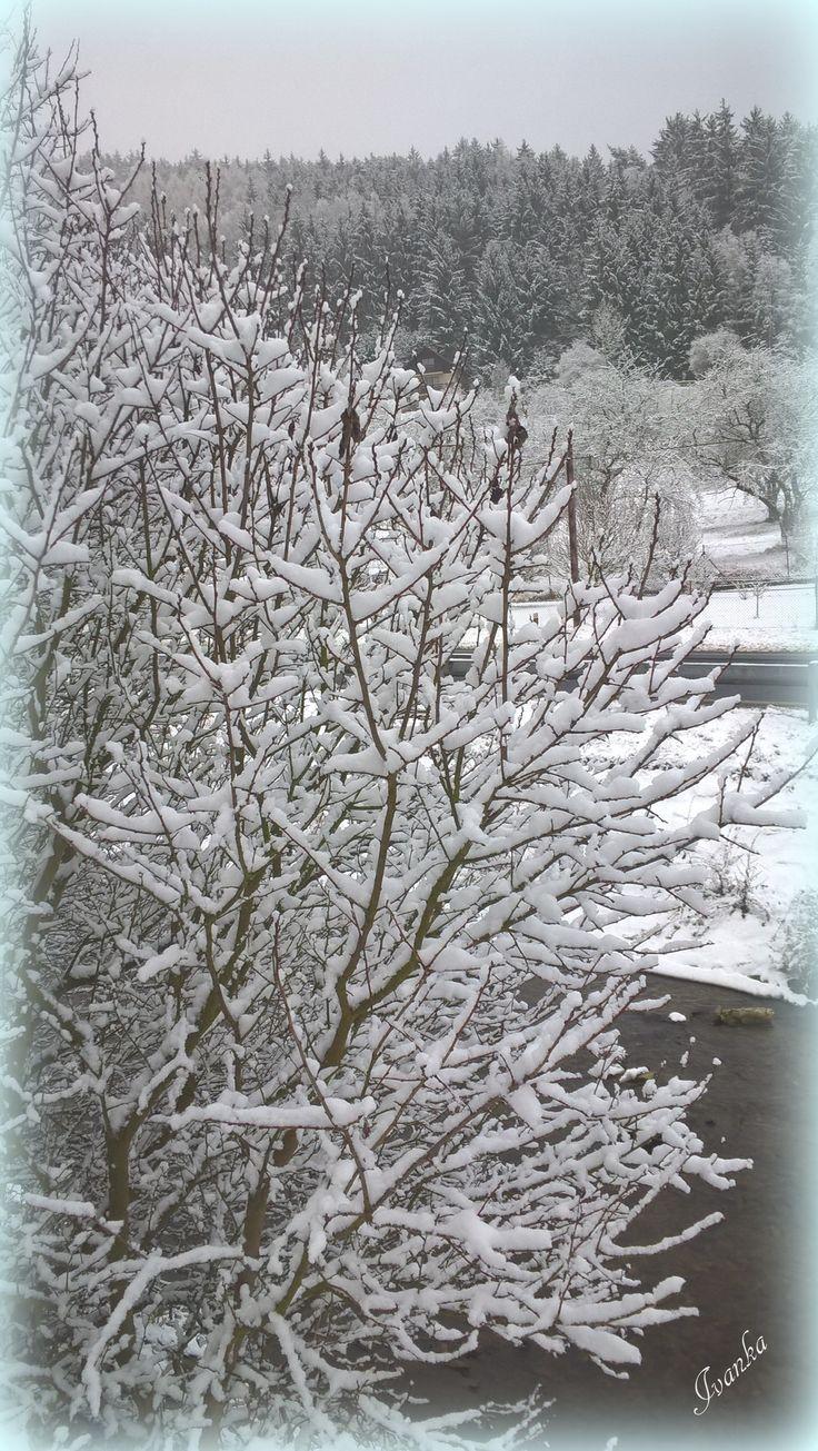 ...po letech bílé Vánoce u nás...