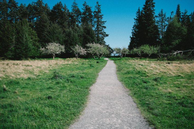landskap tre sti pathway gress utendørs sti felt gård plen eng prærie høyde grusvei beitemark jord møne Grovfôr busk skog habitat økosystem landlig område naturlige omgivelser land mye