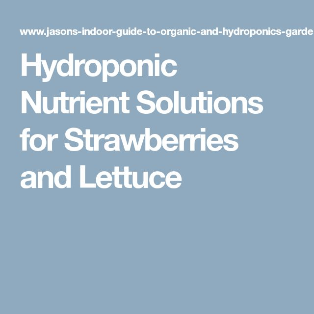 Hydroponic Nutrient Solutions for Strawberries and Lettuce