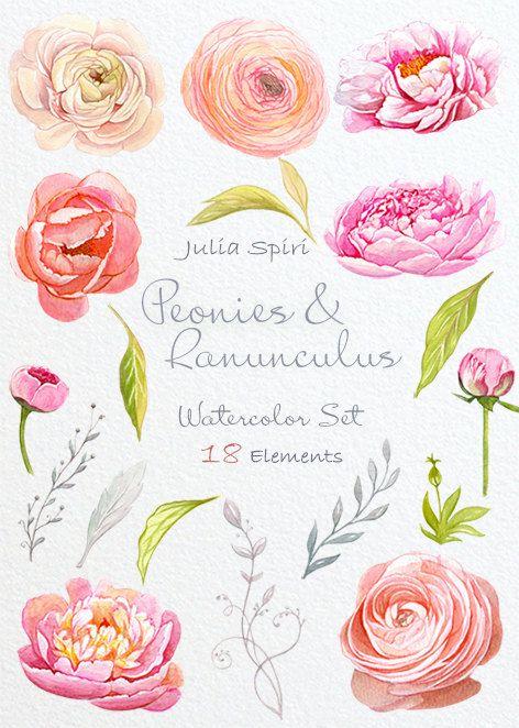 Watercolor Flowers Clipart Peonies Ranunculus by JuliaSpiri