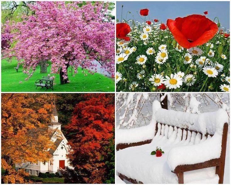 tavasz, nyár,ősz,tél.jpg