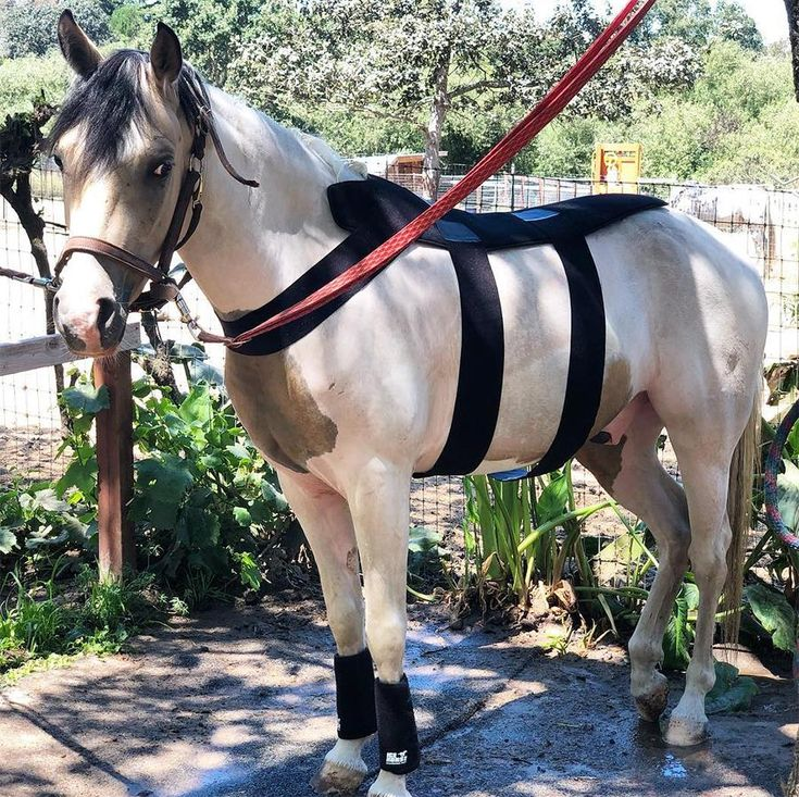 Back blanket ice horse horse cold horses cold therapy