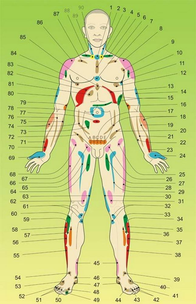Внутренние органы на теле человека. Акупунктурные точки