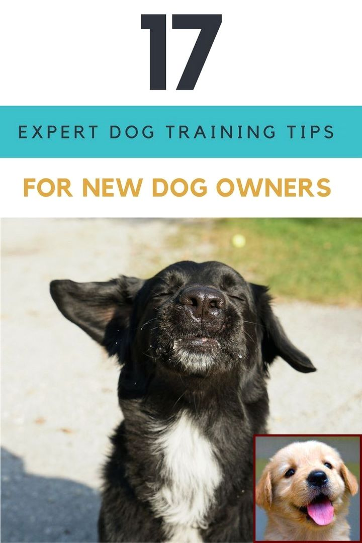 Dog Behavior Showing Teeth And Dog Behavior Jumping