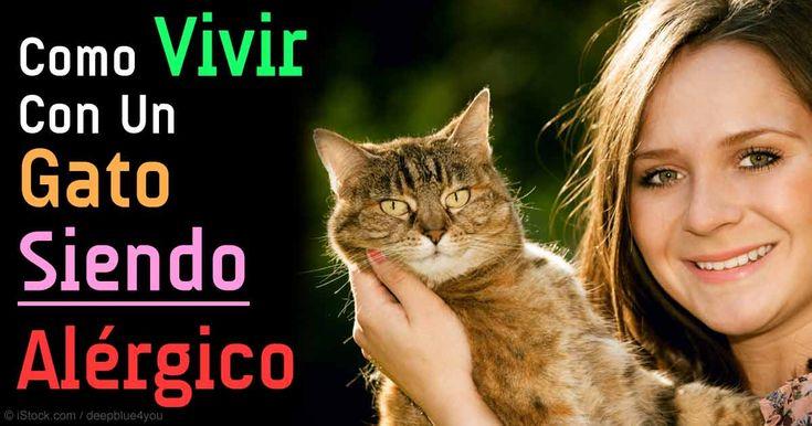 Los felinos que podrían ser una buena opción para las personas alérgicas a los gatos incluyen el gato Balinés, Azul Ruso, Siberiano, Devon y Cornish Rex, y más. https://mascotas.mercola.com/sitios/mascotas/archivo/2015/08/21/10-razas-de-gatos-hipoalergenicos.aspx?utm_source=espanl&utm_medium=email&utm_content=mascotassaludables&utm_campaign=20180311&et_cid=DM192641&et_rid=237560283