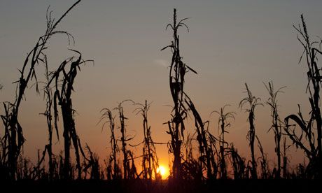 If extreme weather becomes the norm, starvation awaits    With forecasts currently based only on averages, food production may splutter out even sooner than we feared