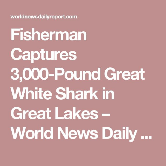 Fisherman Captures 3,000-Pound Great White Shark in Great Lakes – World News Daily Report