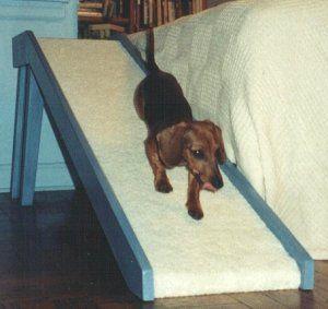 Dachshund Dog Ramp