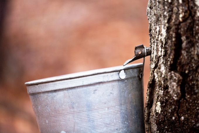 'The Sugar Season': A Bittersweet Tale of #MapleSyrup and #ClimateChange