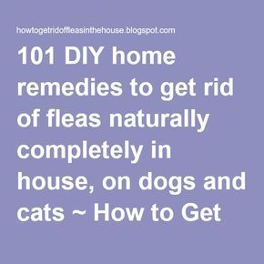 101 DIY home remedies to get rid of fleas naturally completely in house, on dogs and cats ~ How to Get rid of Fleas in the House and outside completely naturally