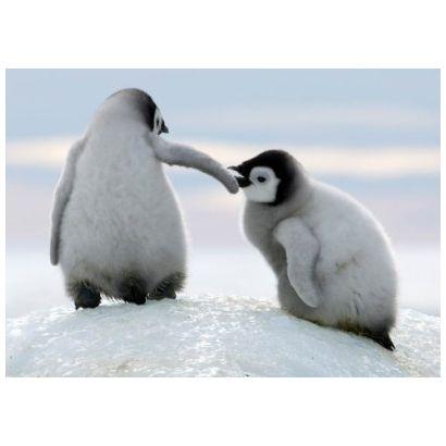 Penguins #postcards
