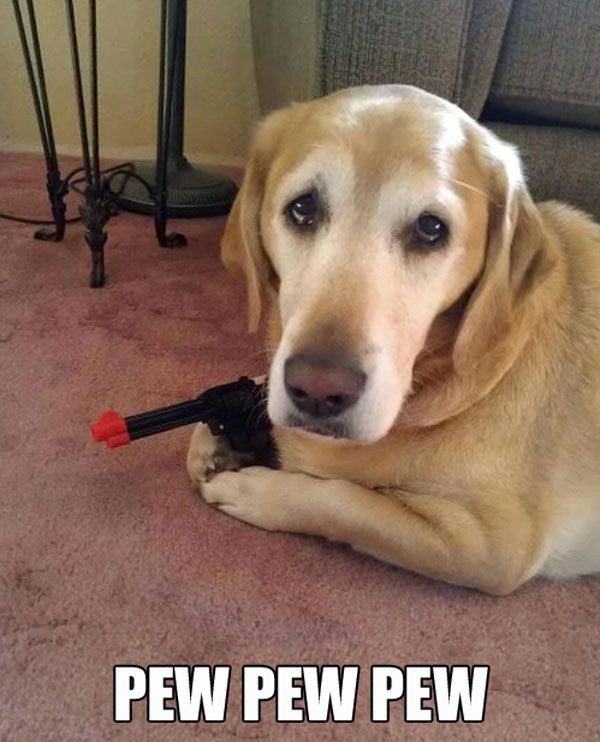 Fun Claw - Funny Cats, Funny Dogs, Funny Animals: Funny Animal Pictures With Captions - 21 Pics